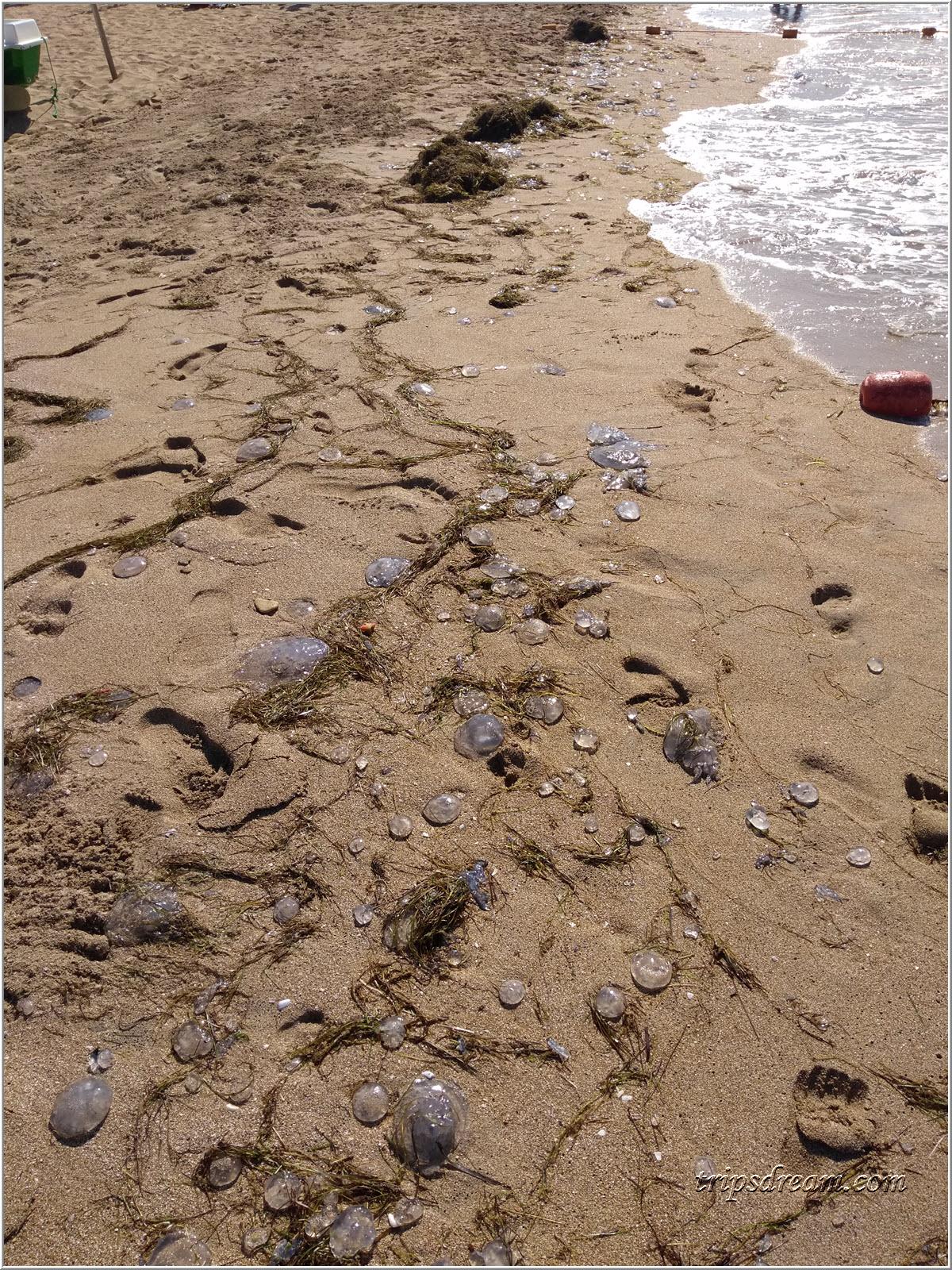 Медузы на пляже в Евпатории