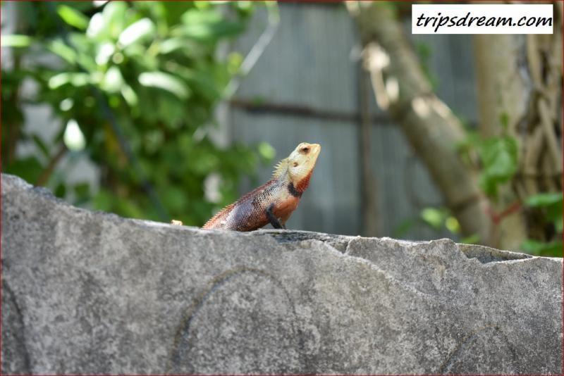 Fauna1_1280_854