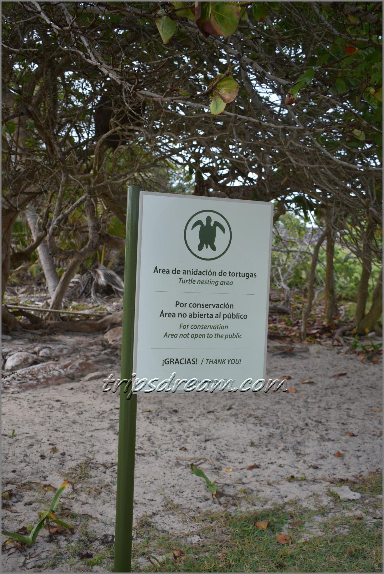 Тулум - место гнездования черепах