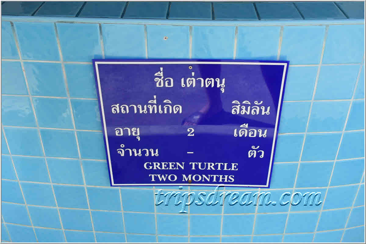 50_Табличка на бассейне