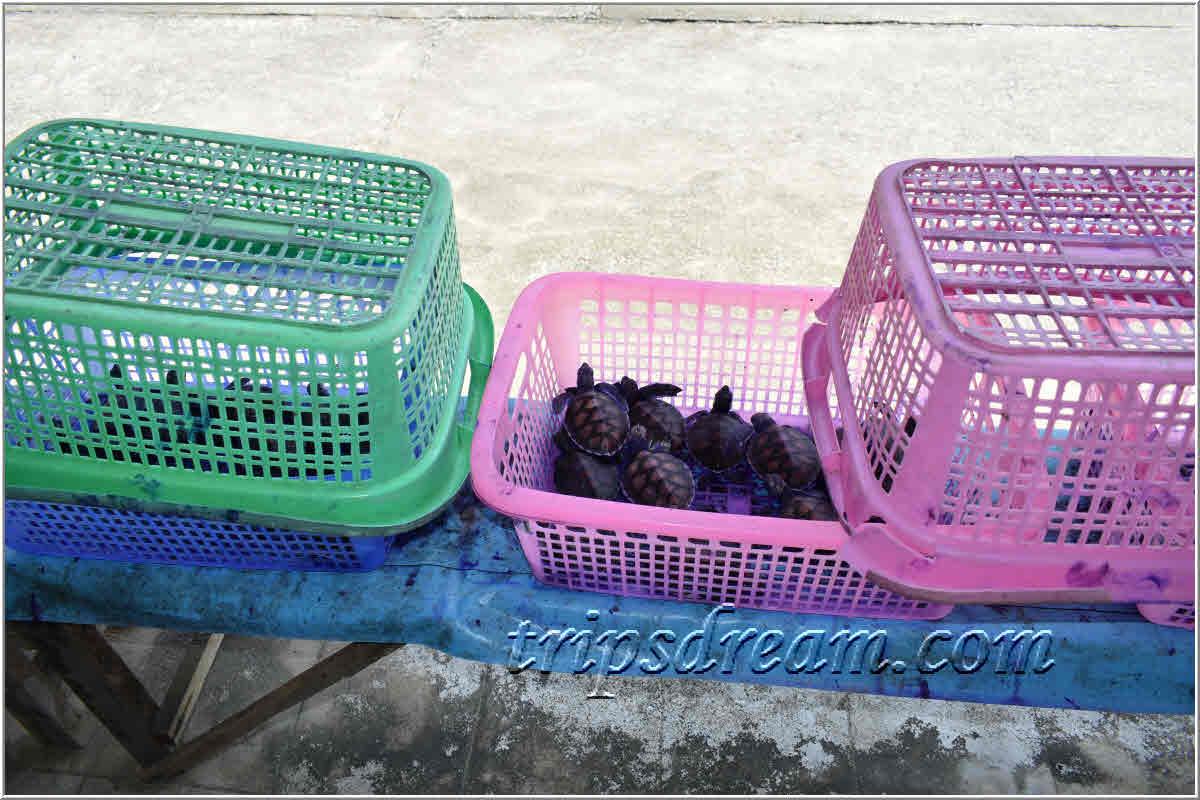 910_Черепахи в корзинке