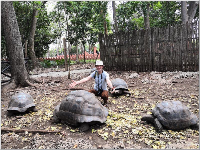 Гигантские сейшельские черепахи на Призон Айленд