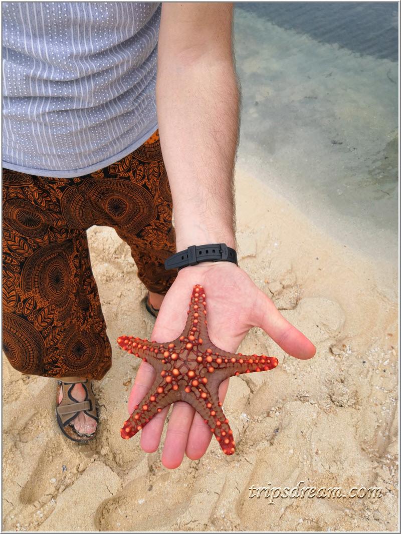 Есть первая морская звезда! Призон Айленд (Prison Island). Занзибар