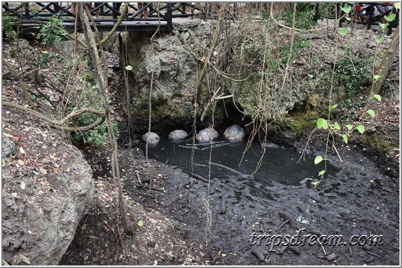 Настоящая черепаха везде грязь найдёт. Призон Айленд (Prison Island). Занзибар