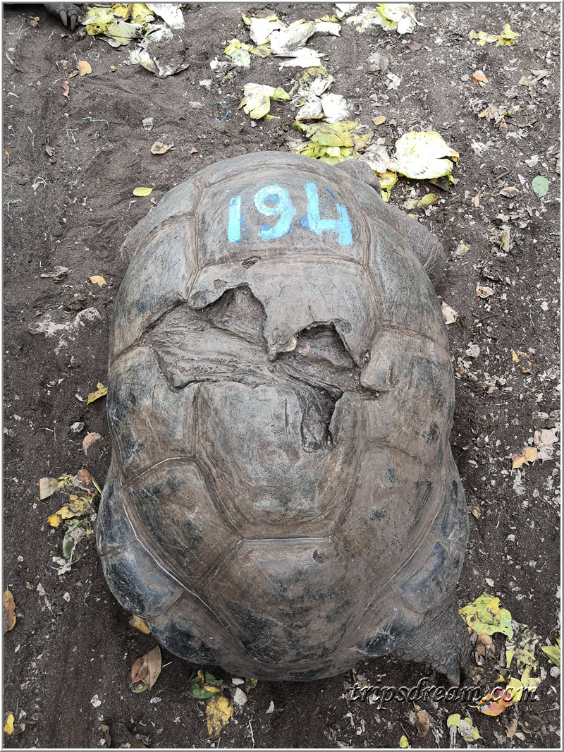 Самая старая черепаха. 194 года. Призон Айленд (Prison Island). Занзибар