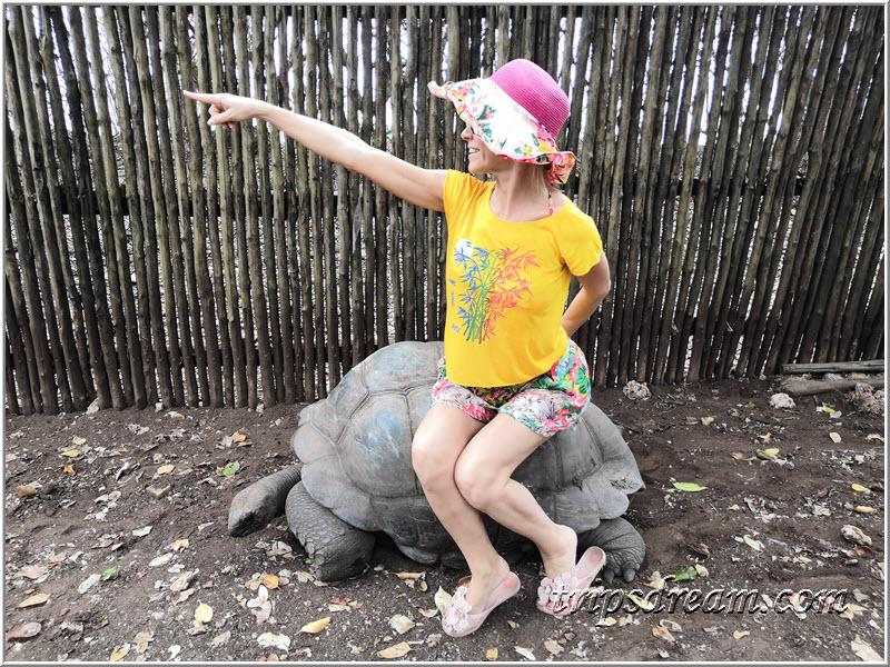 Вези меня, большая черепаха!