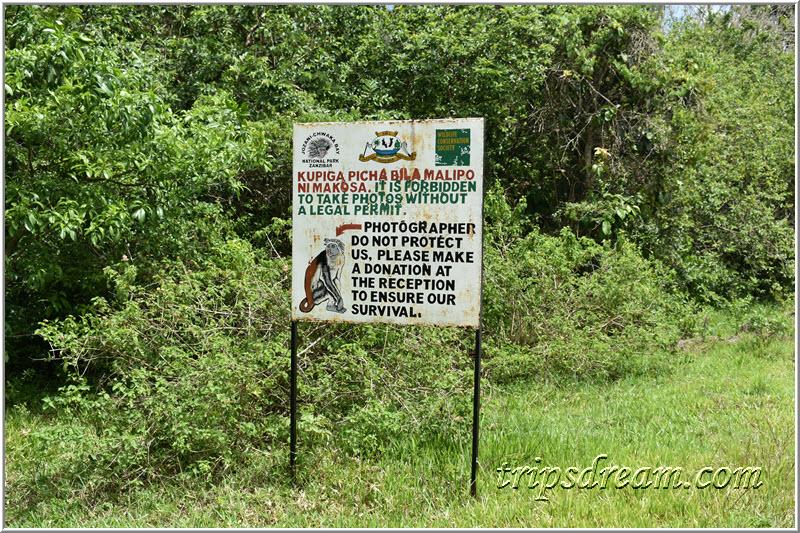 Фото колобусов только за деньги. Парк Джозани. Занзибар