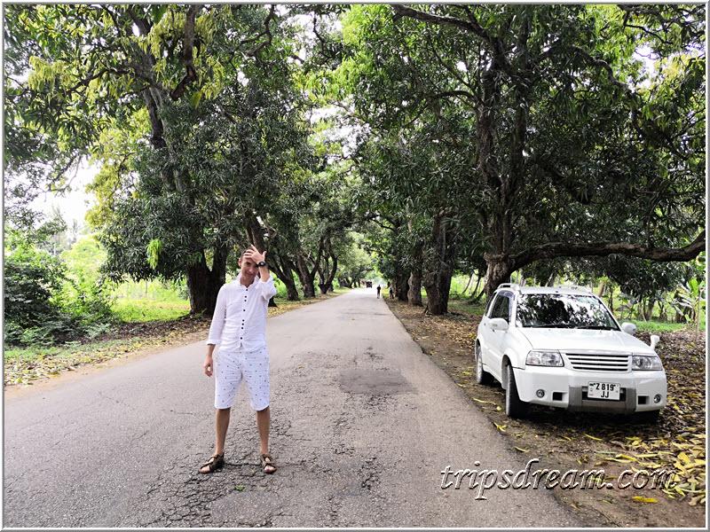 Асфальтовая дорога на Занзибаре