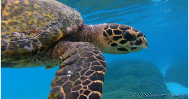Плавание с черепахой на Мальдивах