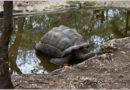 Гигантские черепахи Занзибара